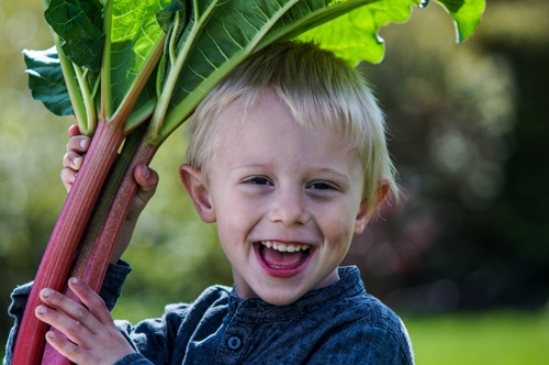 Pre-schooler holding rhubarb
