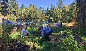 Volunteers Clearing Community Garden