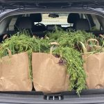 A vehicle full of Harvest Bags