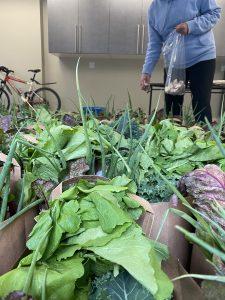 NCS volunteer placing garlic in harvest bags